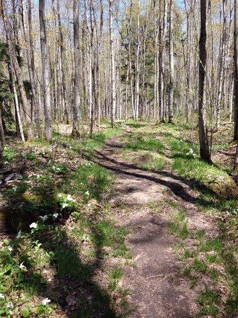 Inglis Falls: Pine Loop Trail