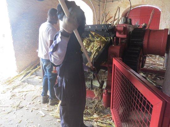 St. Nicholas Abbey: Grinding sugar cane