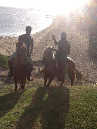 Bedarra Beach Inn: Evening Horserides at Bedarra Beach