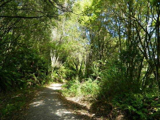Aratiatia Rapids : Gorgeous Walkway
