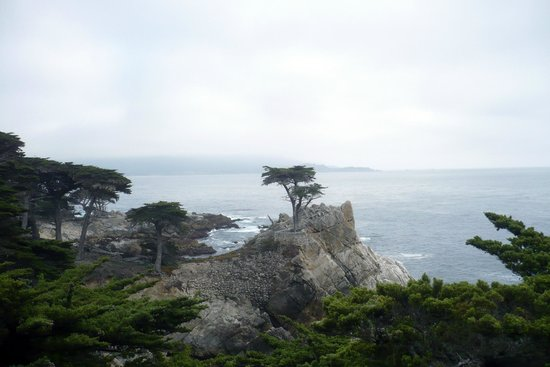 17-Mile Drive : The Famous Lone Cyprus