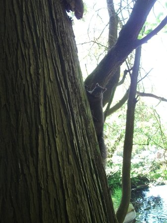 Friendship Gardens & Tipperary Park: Squrrel in the park
