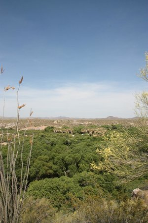 Hassayampa River Preserve: One view from the top