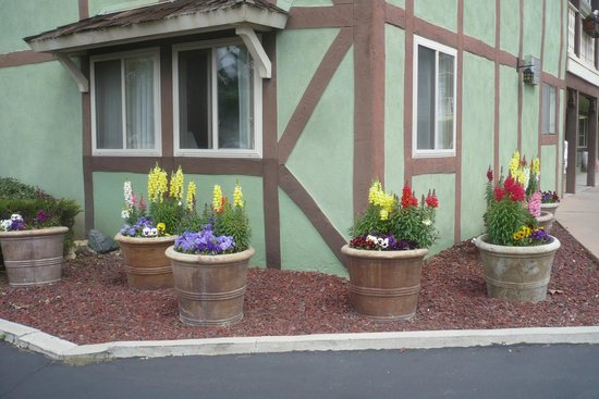 Svendsgaard's Lodge - Americas Best Value Inn: Beautiful flowers