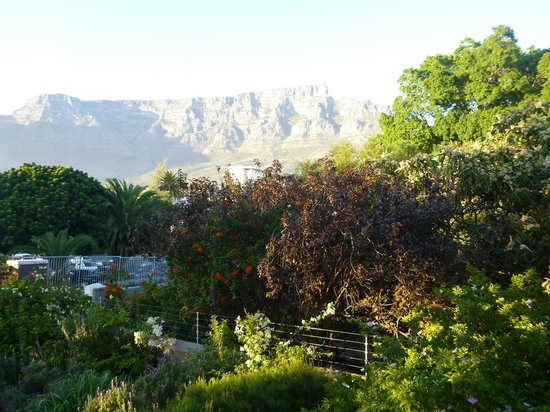 The Backpack: view of table mtn from the garden