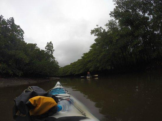 Nakama-river Protected Region : 仲間川支流