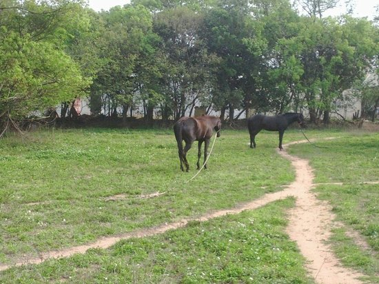 Kinmen Island: 金門高中旁邊;享受陽光,悠閒的馬. 金門,台灣.  Look those horses feeling relaxed  and enjoying themselves  in the s