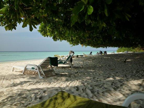 Biyadhoo Island Resort: 天然の木陰がいたるところに
