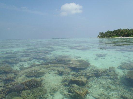 Biyadhoo Island Resort: 干潮時は珊瑚が海面から出るほどの浅瀬