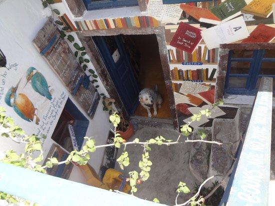 Atlantis Books : A litlte friend