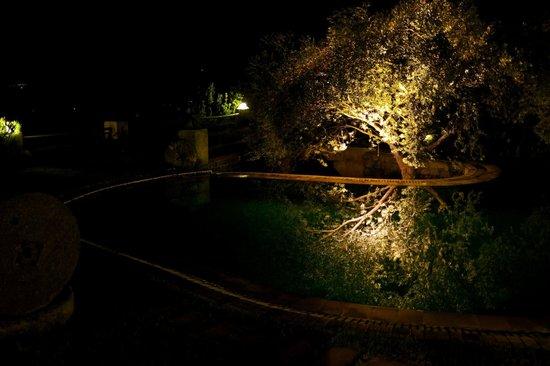 Antik Zeytin Hotel & Art: Olive