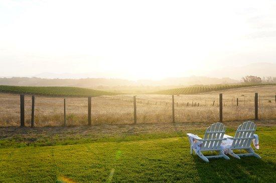 Carneros Resort and Spa : Vineyard view at dawn