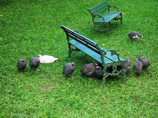 Spice Village: Local Wildlife