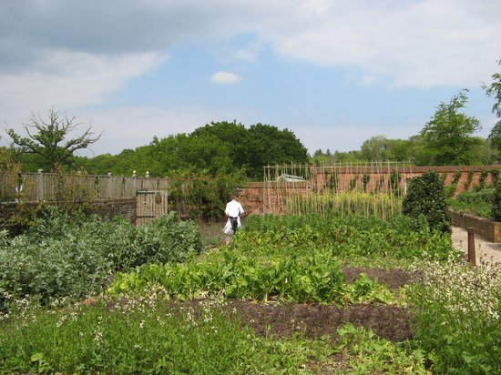 The Pig: Kitchen garden