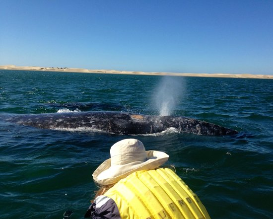 Baja Outdoor Activities (BOA): Whale watching - Magdalena Bay