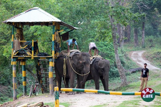 Elephant safari - Gorumara National Park