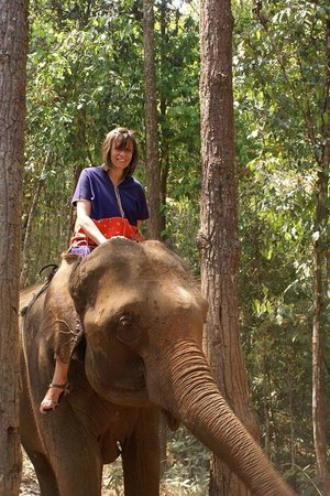 Patara Elephant Farm - Private Tours : Riding Cham Poo through the forest