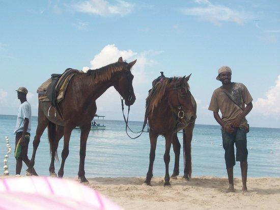 White Sands Negril: horseback riding on the beach