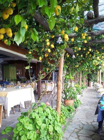 Costa Diva Restaurant: I limoni della costiera
