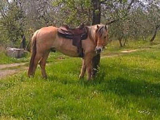 Castellare di Tonda Resort & Spa: My trusty steed