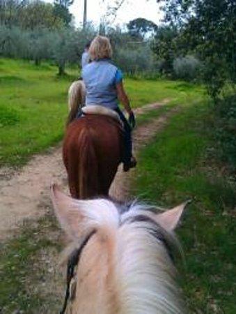 Castellare di Tonda Resort & Spa: Olive grove trekking