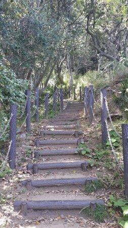 Sarushima Island (Monkey Island): Climb to the observation tower.