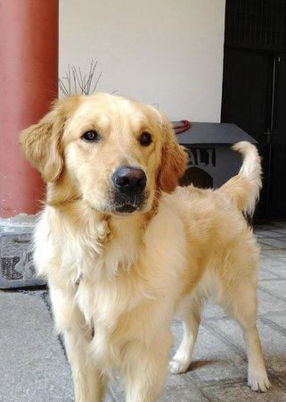 Yuan Lai Ge Inn: Dali, Ling's dog