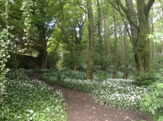 Tupgill Park Cottages : Wild Garlic Tupgill Estate