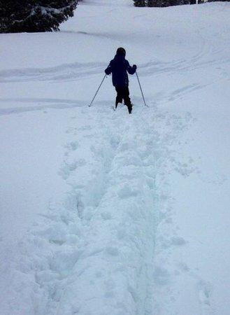 Alta Ski Resort: Alta Deep Powder
