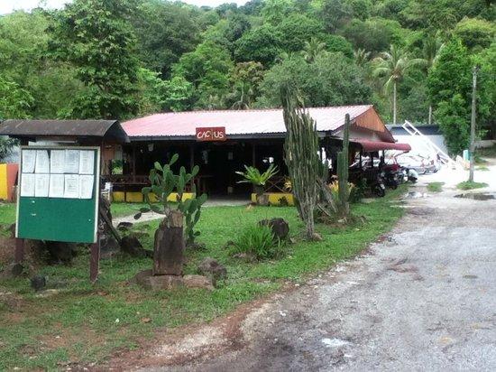 Cactus Restaurant: The cactus