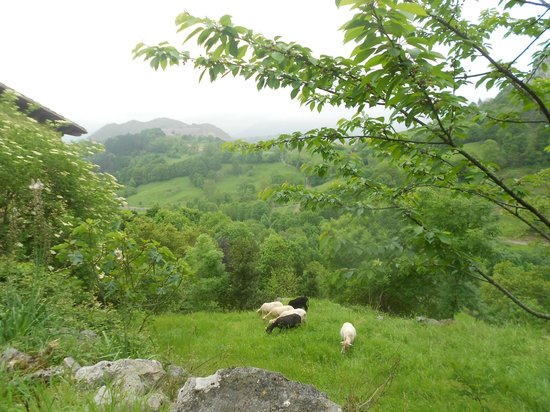 Hotel Posada del Valle: view and sheep