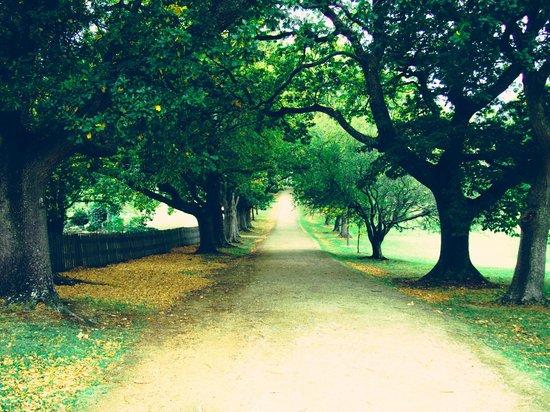 Site historique de Port Arthur : Autumn road  