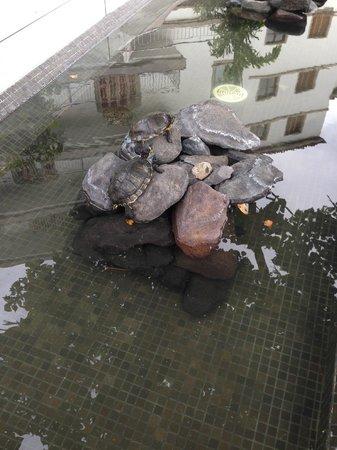 Iberostar Grand Hotel Mencey: Laguna con tartarughe nel giardino