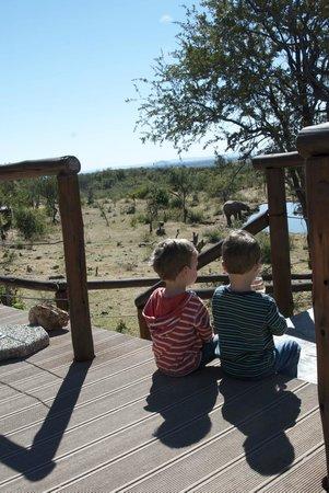 Royal Madikwe Luxury Safari Lodge : Watching the elephant drink at the water hole