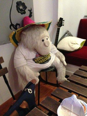 Hotel Meyerbeer Beach : macaco na sala comum do hostel