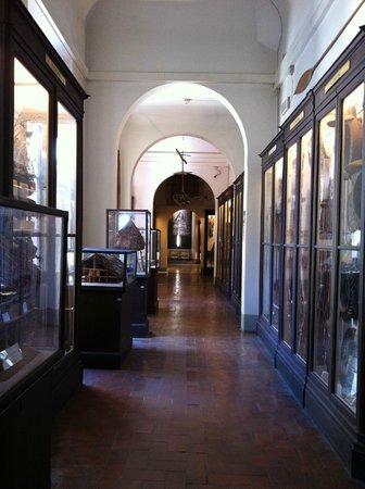 Museum of Anthropology and Ethnology: Corridoio del Museo Nazionale di Antropologia e Etnologia