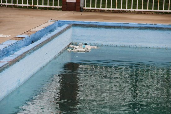 Route 66 Hotel And Conference Center : Pool with rubbish in it