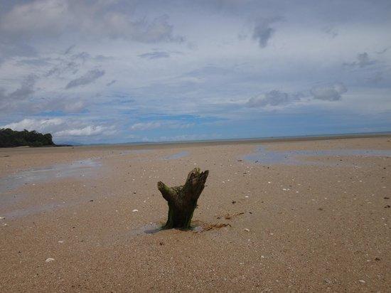 Ravintsara Wellness Hotel: Пляж днем (отлив)