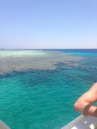 Xperience St. George Homestay: Coral on the Tiran boat trip