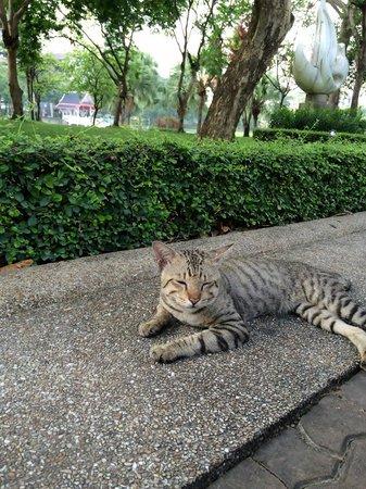 Benjasiri Park: Lovely cat