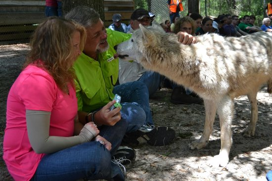 Seacrest Wolf Preserve: Well, hello there!  Up close and personal