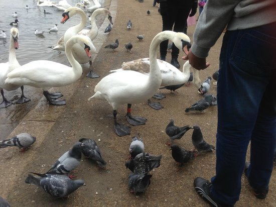 Hyde Park : Feeding the birds..they're so friendly and enjoyable to watch