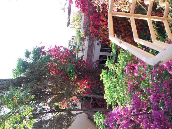 Riad Malika : riad en fleur 201422