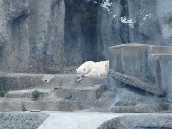 Polar Bear Picture Of Budapest Zoo Amp Botanical Garden