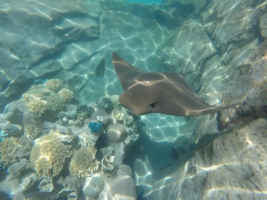 Discovery Cove: Stingray photo.  Taken with GoPro.