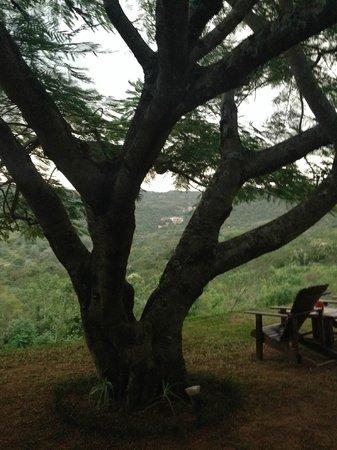 Abangane Guest Lodge: skyfall