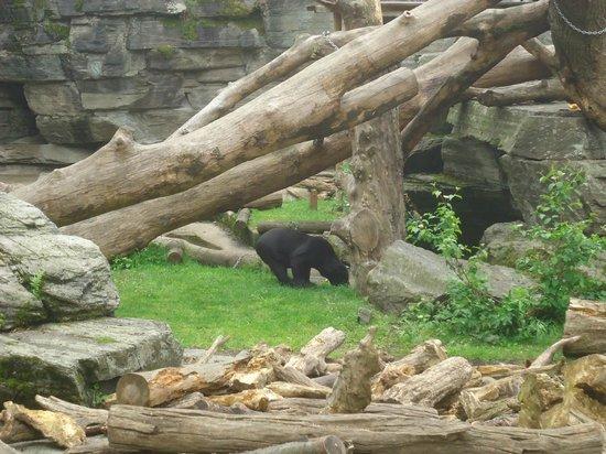 Kölner Zoo: Zoo de Cologne - Ours