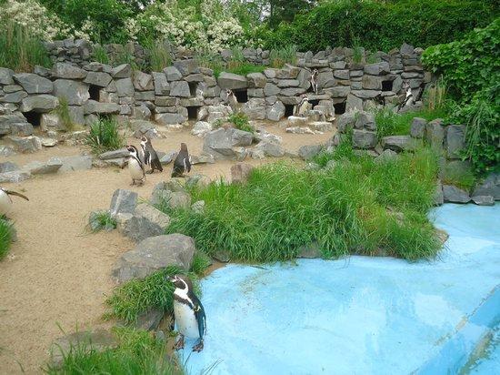 Kölner Zoo: Zoo de Cologne - Manchots de Humbolt
