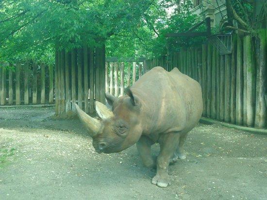 Koelner Zoo : Zoo de Cologne - Rhinocéros