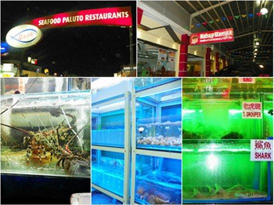Shogun Suite Hotel: PALUTO seafood